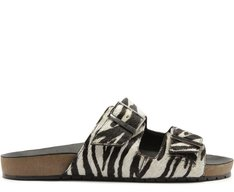 Birken Zebra